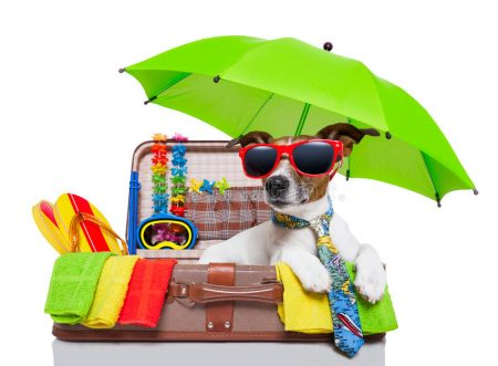 summer-holiday-dog-vacation-bag-full-items-31584116